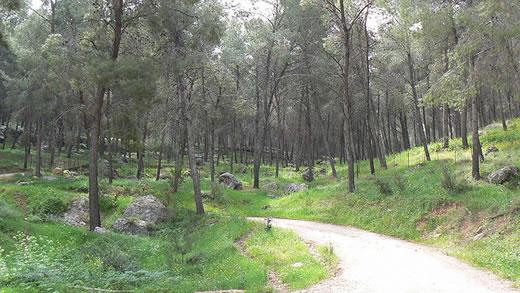 Góra Gilboa w Izraelu