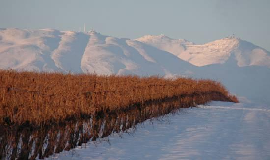 Winnice w Izraelu